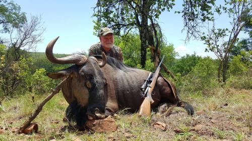 Blue Wildebeest Bull – Musgrave .30-06, 220gr Sierra