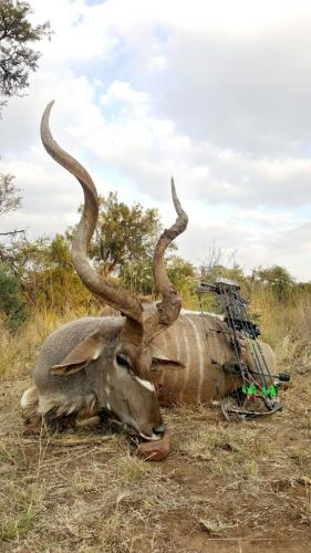 Kudu Bull – Martin Bow, 70 Pounds, 390gr Arrow
