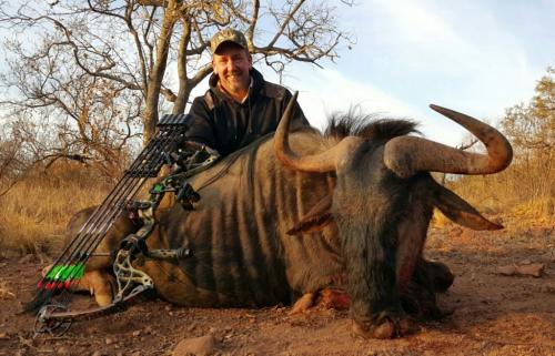 Blue Wildebeest Bull – Bowtech Destroyer 340, 65 Pounds, 340gr Arrow
